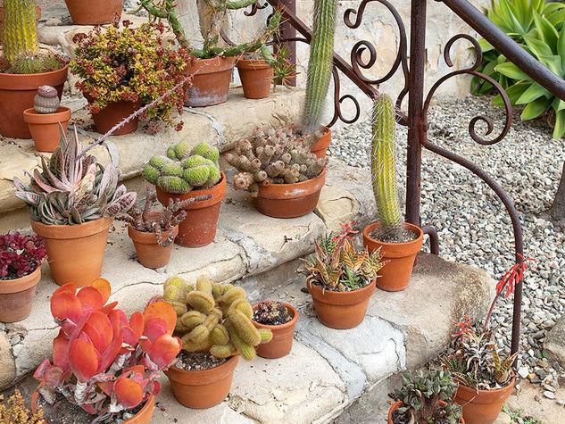 Le piante grasse vendita e consegna fiori a domicilio - Piante grasse da esterno pendenti ...