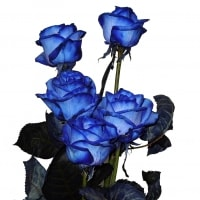 Inviare online Rose Blu