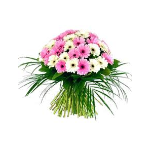 send online white an pink gerberas
