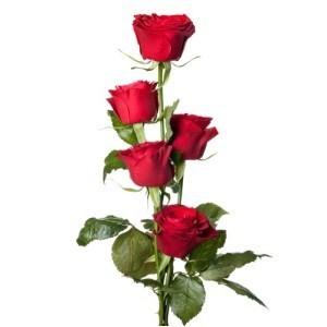 Inviare online mazzo 5 rose rosse