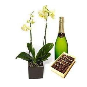 Inviare online orchidea e regali