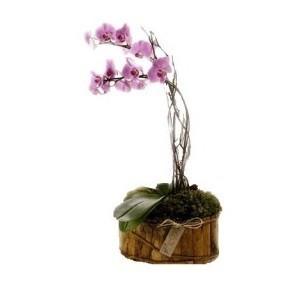 Inviare online pianta di orchidea